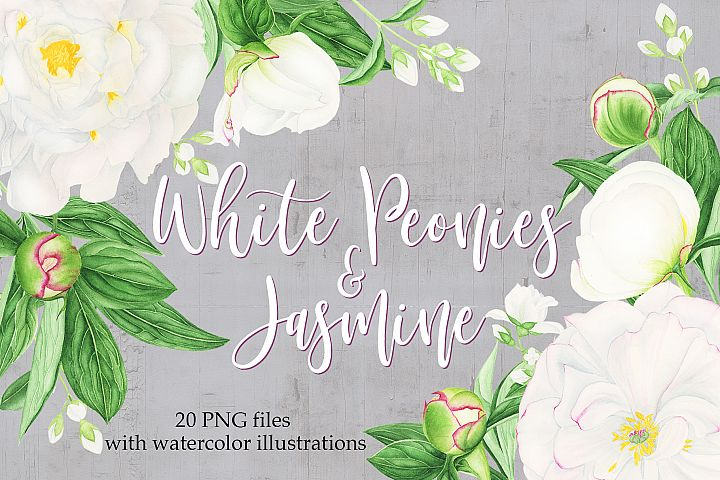 Watercolor White Peonies and Jasmine