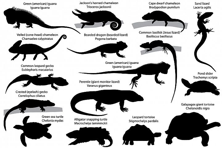 Silhouettes of reptiles