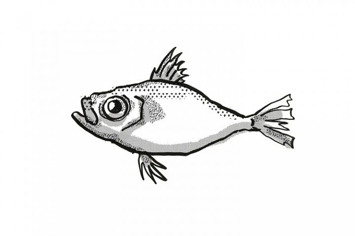 Japanese Dory Fish Cartoon Retro Drawing