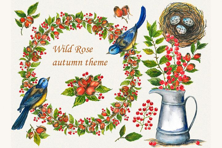 Wild rose clipart, Watercolor Wild rose clipart, rosehip