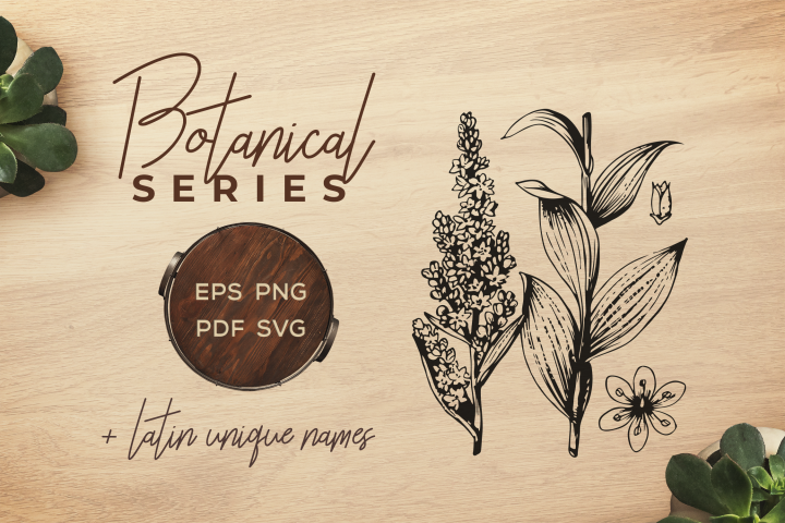Botanical Vintage Flowers - Illustration False helleborine