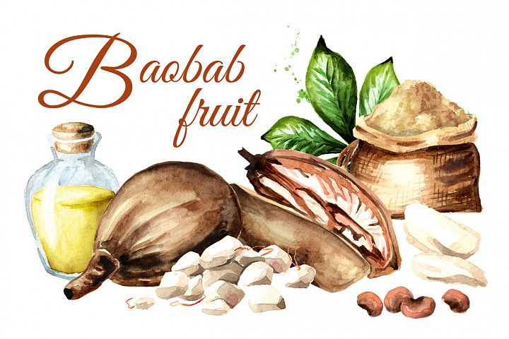 Baobab fruit. Watercolor collection
