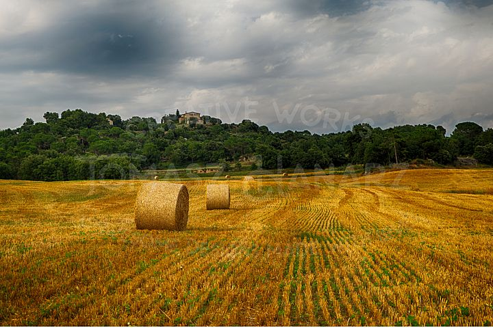 Harvest Field 3