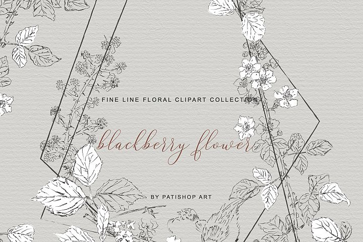 Hand Drawn Fine Line Clipart Blackberry Flower