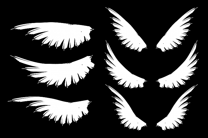 Set of bird wings. White and black wings.