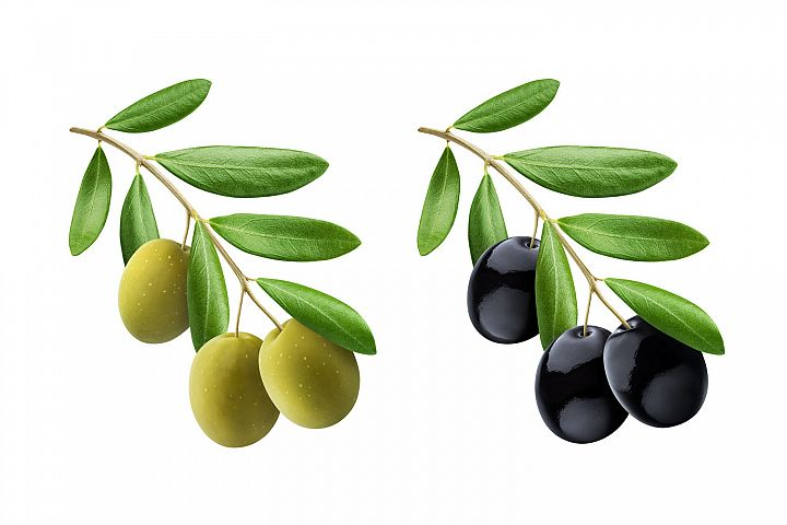 Olive tree branch with green and black olives