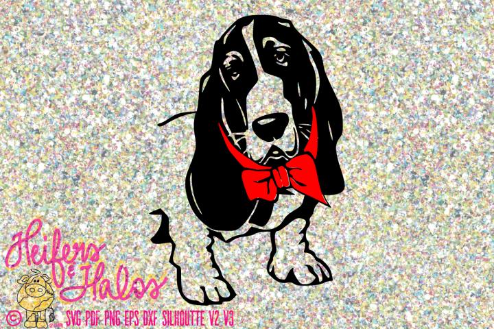 Basset Hound with Bow Tie