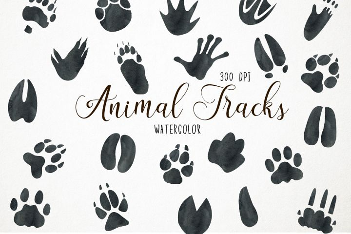 Watercolor Animal Tracks, Animal Tracks Clipart, Footprints