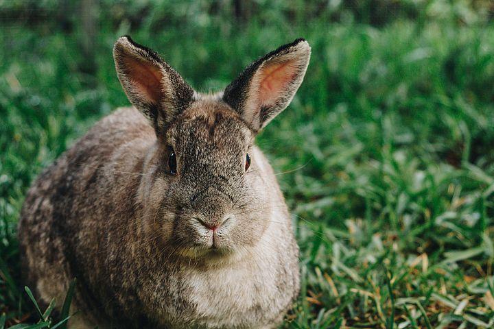 Bunny photo 24