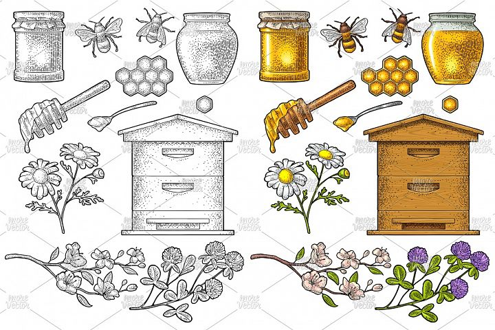 Honey set. Vector vintage color engraving