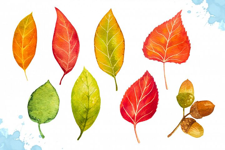 Autumn leaves. Watercolor set. example image 2