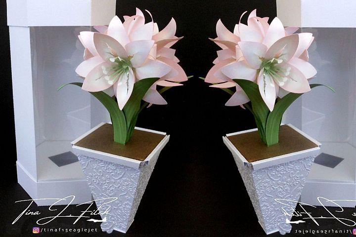 3D Amaryllis & Box