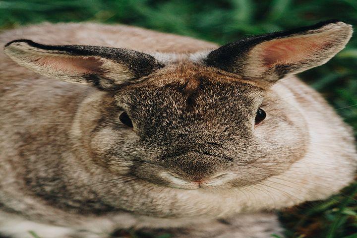 Bunny photo 27