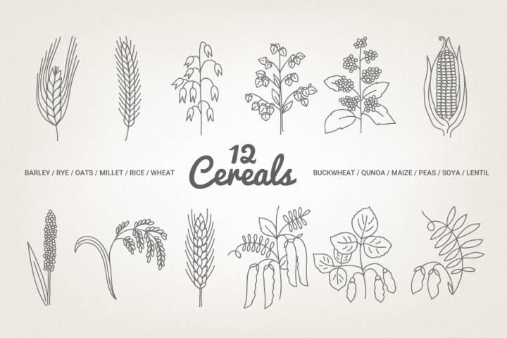 12 Cereals - Illustration & Patterns