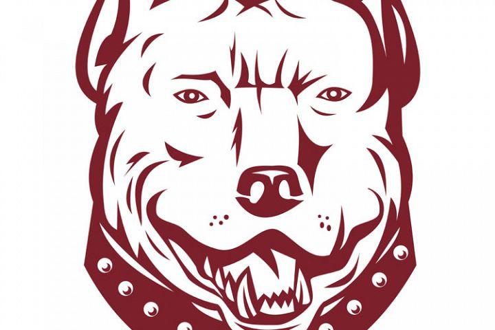 pitbull pit bull terrier mongrel dog head front