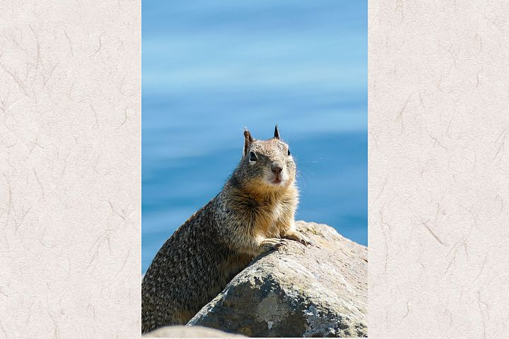Squirrel photo 15