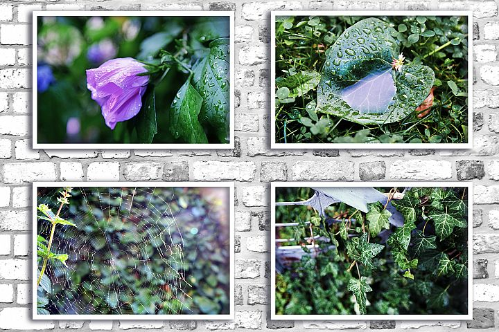 Nature photo, floral photo, flower photo, summer