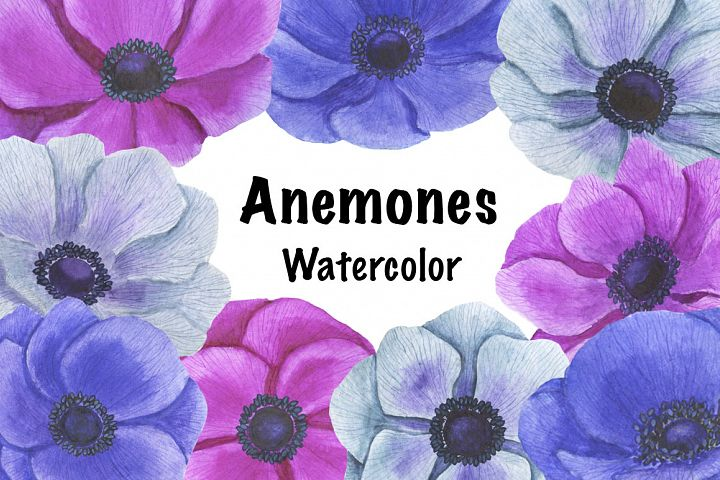 Anemones flowers watercolor