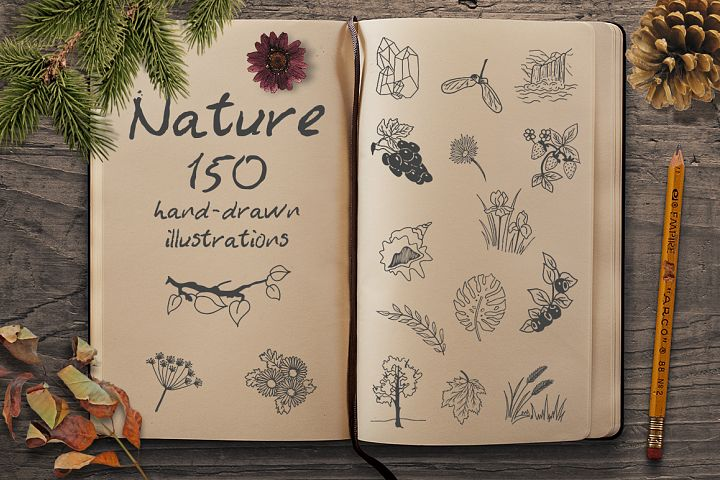 Hand Drawn Illustrations -Nature-