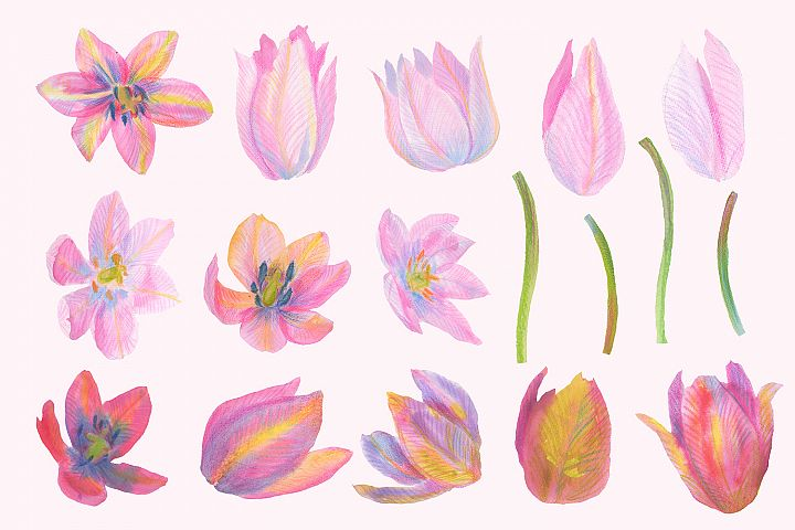 Floral Design Pack (watercolor & pastel) - Free Design of The Week Design 7