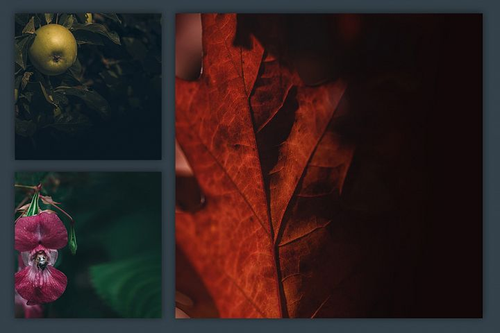 Instagram Photo Pack - Flora Vol. 1 example 3