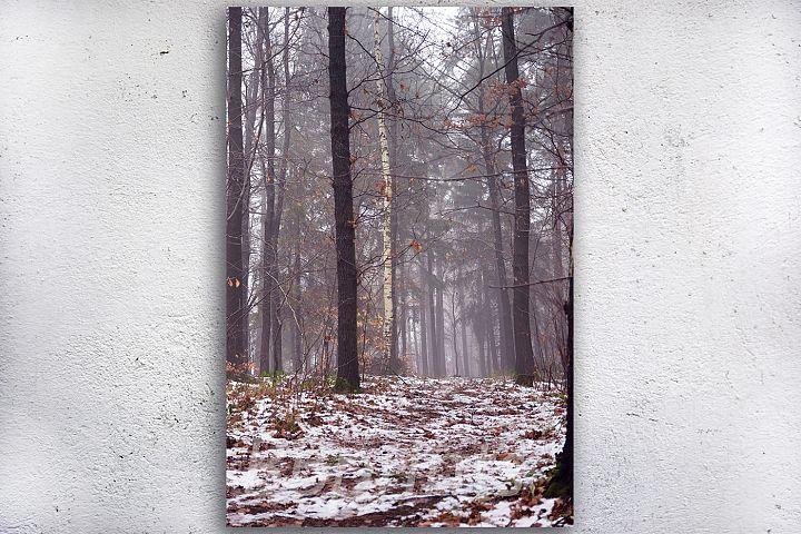 Nature photo, landscape photo, forest photo, winter photo