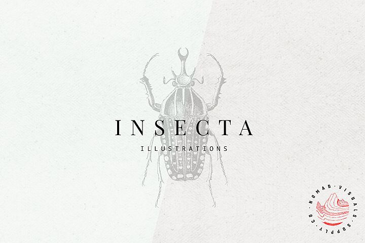 Premium Insects Illustrations