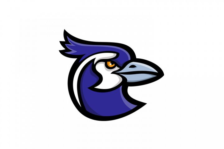 Black-throated Magpie-Jay Mascot