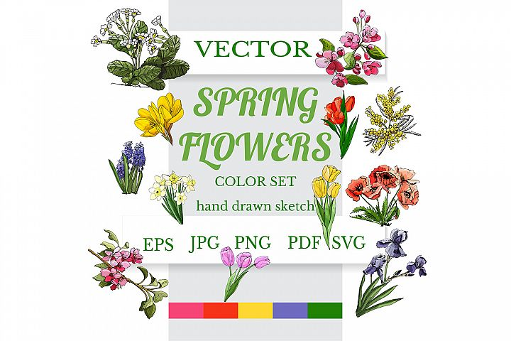 Hand drawn spring flowers. Color vector clipart.