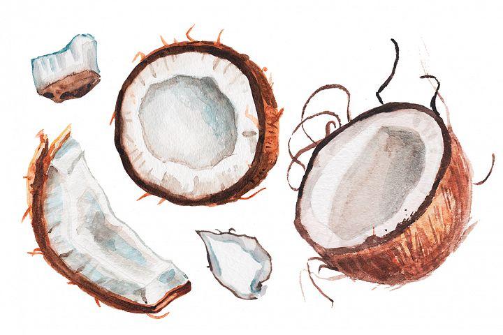 Watercolor coconut illustration