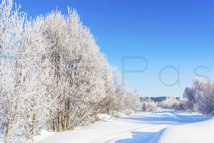 Winter road landscape with white frozen trees.
