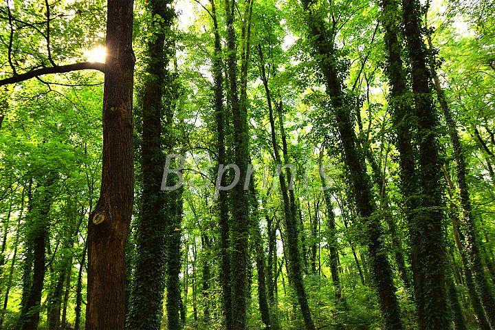 Nature photo, landscape photo, forest photo, spring photo