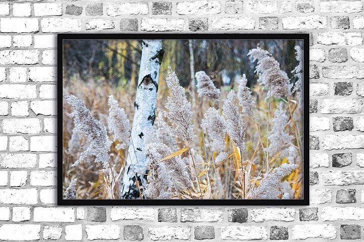 Nature photo, floral print, autumn print, floral