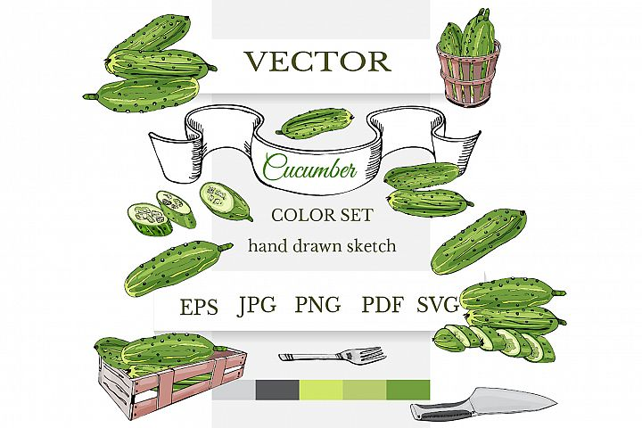 Hand drawn colored sketch of green cucumbers. Vector clipart
