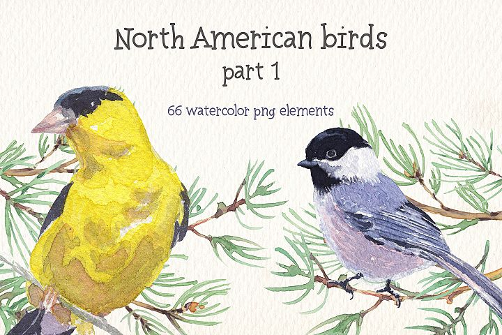 Birds of North America watercolor clipart