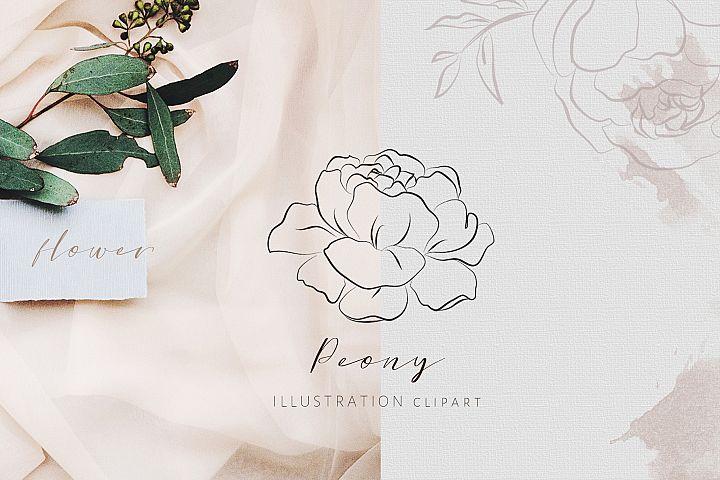 Flower Line Art - Peony Illustration