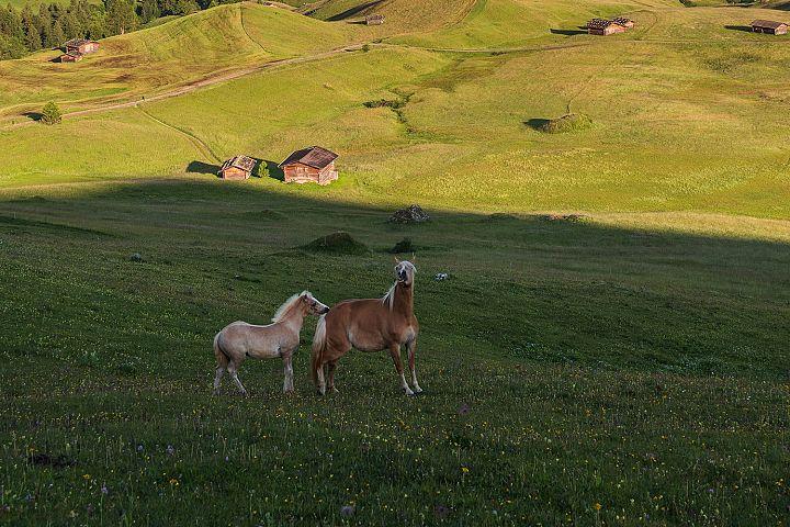 Horses at Seiser Alm