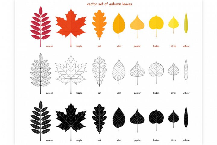 Vector set of different tree leaves