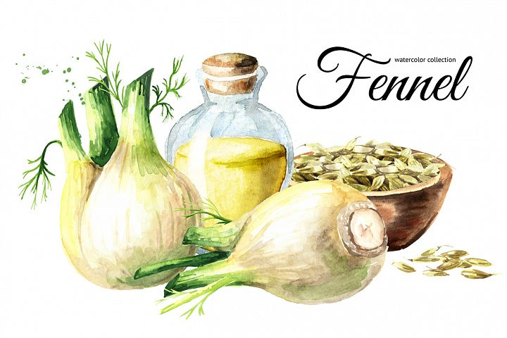 Fennel. Watercolor collection