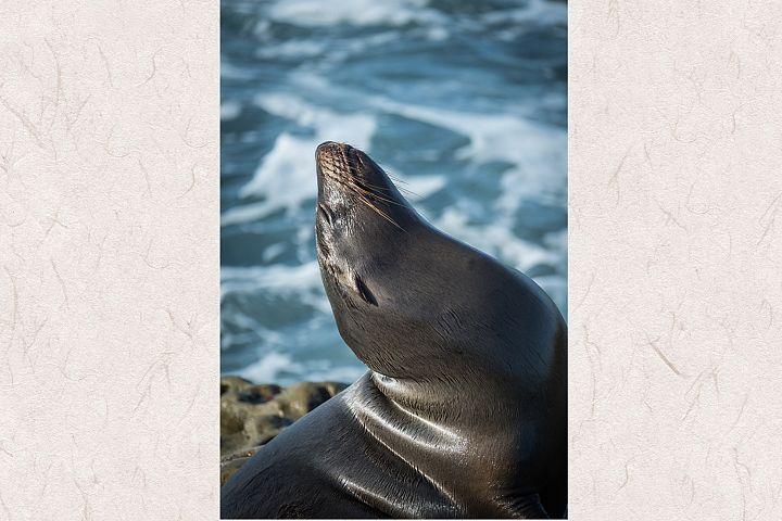 Seal photo 16