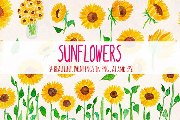 Bright Sunflowers 34 Sunny Vector Graphics