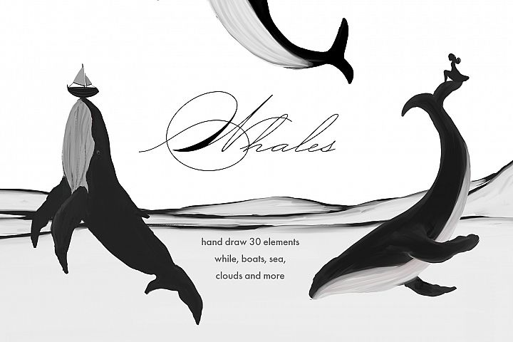 Whales illustrations