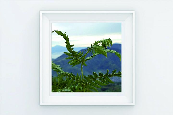 FRAME POSTER TREE ON MOUNTAIN