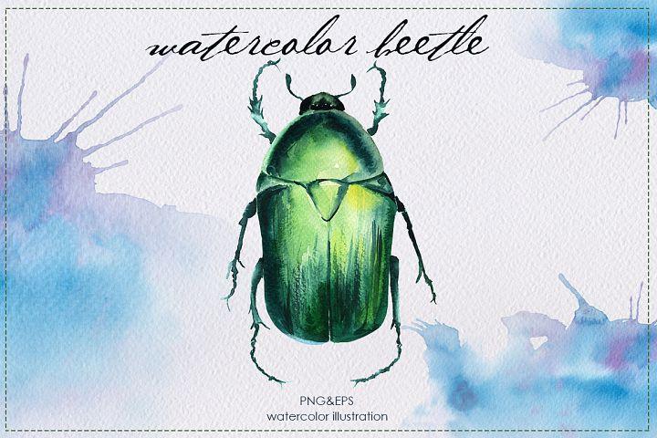 watercolor beetle