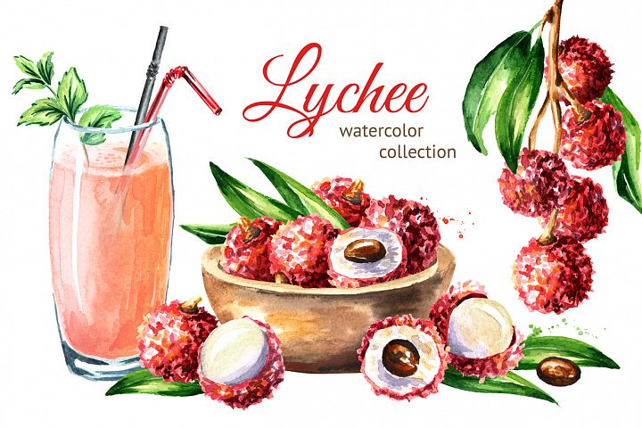Lychee. Watercolor collection