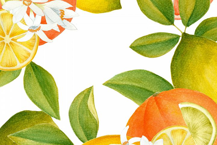 Citrus clipart