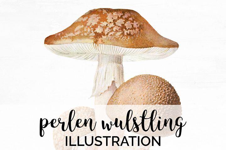 Mushroom Vintage Perlin-Wulstling Mushroom
