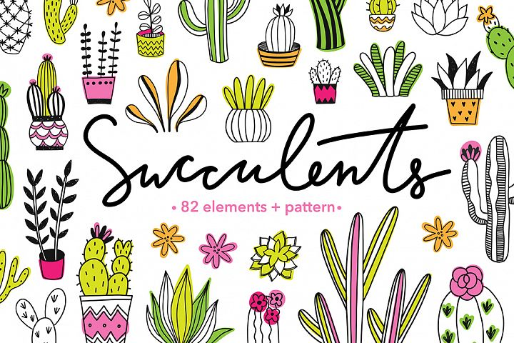 Succulents Illustrations & Pattern