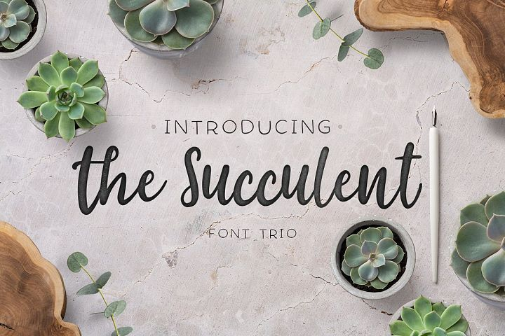 The succulent - font trio!