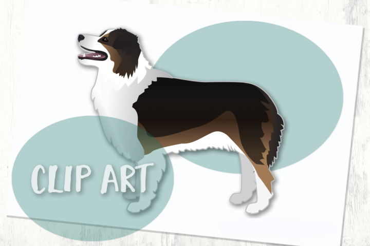 Australian Shepherd Dog Clip Art